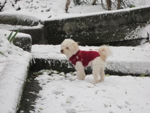 Pisolo e la neve! - © bastoncini di zucchero