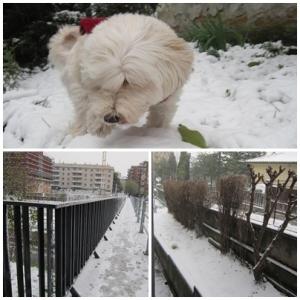 neve 2012, Trieste - © bastoncini di zucchero